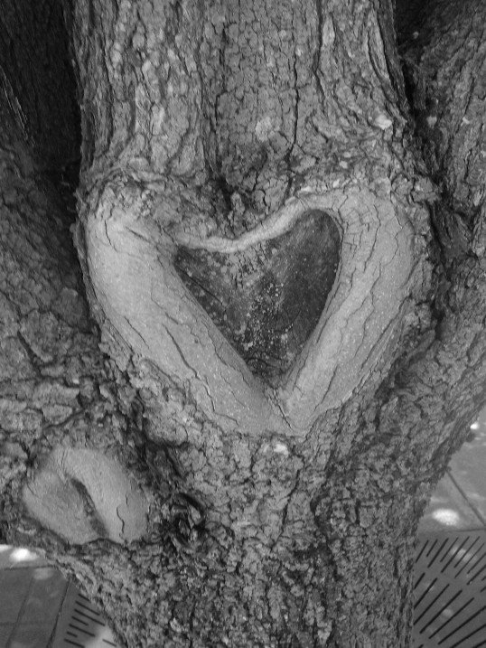 Heart in a Tree