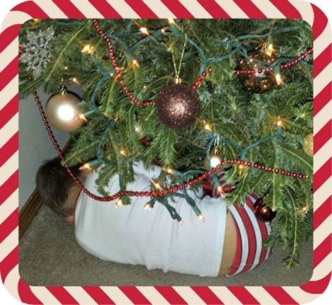 C-Dog tried to sleep under the tree. Silly boy.